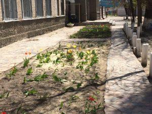 цветы 26.04