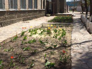 26.04.17 цветы